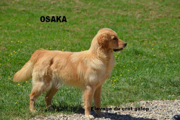 Osaka des FIELDS D'EST